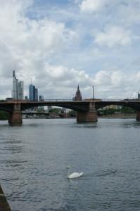 Frankfurt mit Brücke, Skyline und Schwan