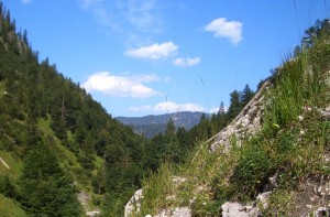 Blick durch das Tal